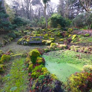 Fernhill gardens Stepaside
